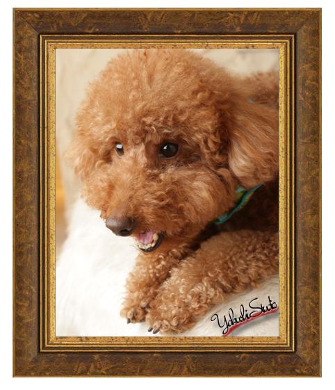 1407311443 ペット 犬 写真 ブログ