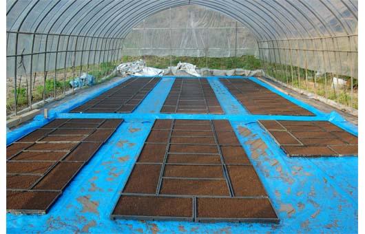 播種とハウスでの育苗