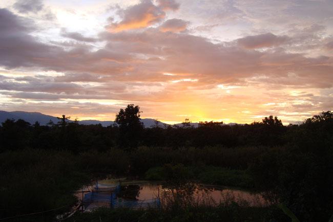 養魚池に映る夕焼け!
