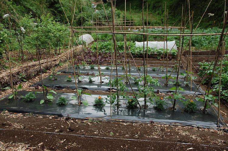 菜園0124-140522-03