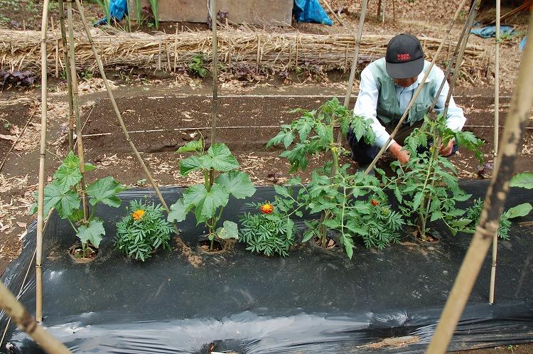 菜園0121-140522-01