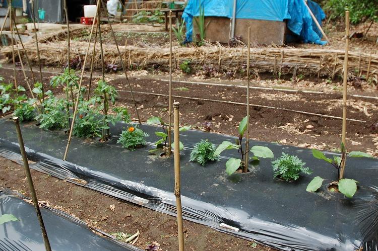 菜園0122-140522-02