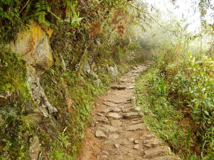 ペルー2014.1マチュピチュ・インカ橋への道