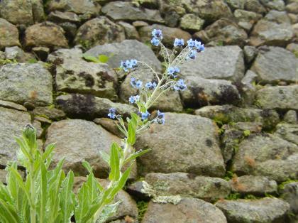 ペルー2014.1マチュピチュ・植物