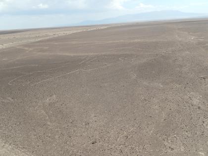 ペルー2014.1ナスカ地上絵