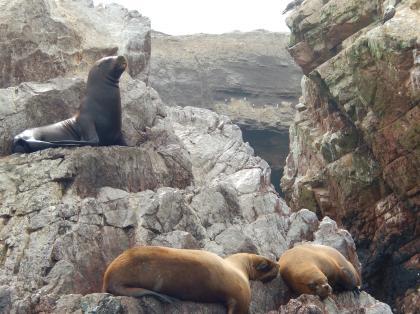ペルー2014.1パジェスタス島