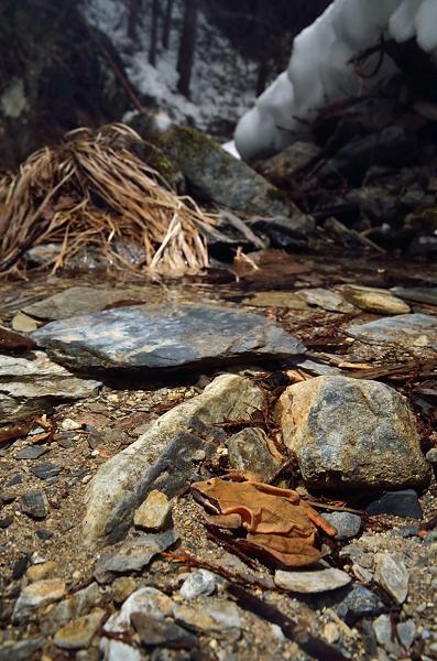 冬の渓流にナガレタゴ