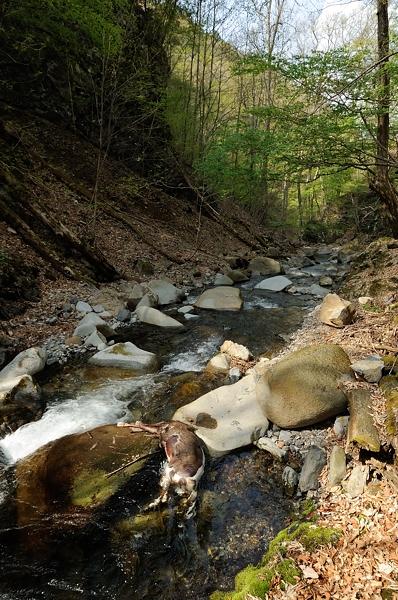 死体と渓流