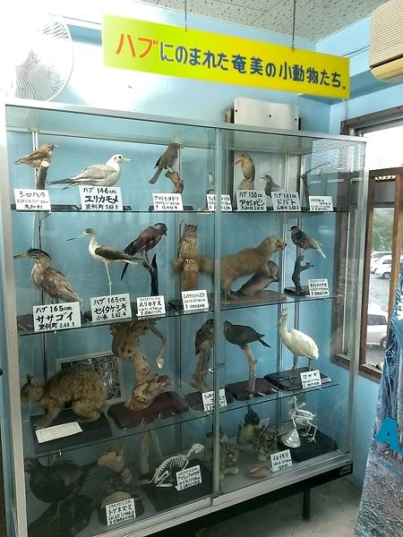 ハブにのまれた奄美の小動物たち