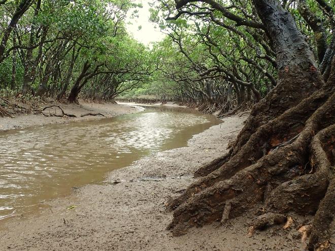 下からのマングローブ林