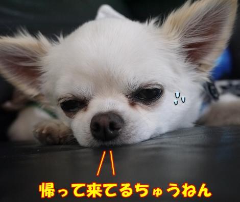 gf5P1150022.jpg