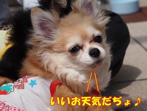 pl3P4120073.jpg