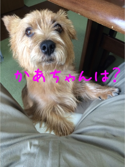fc2blog_20140329215243b12.jpg