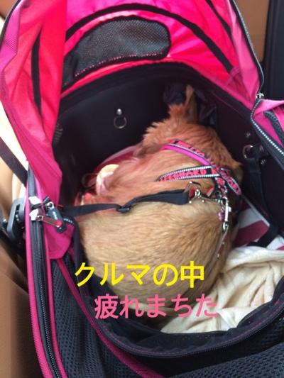 fc2blog_20140413165018225.jpg