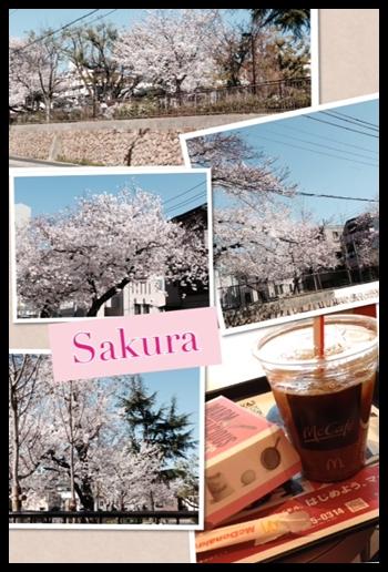4sakura1.jpg
