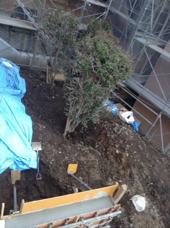 埋もれた木