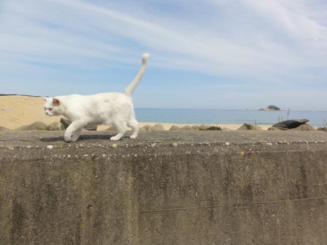 2012年9月7日 束草 海辺のネコ