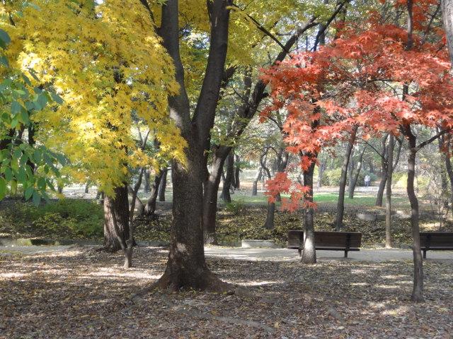 2013年11月5日 色づく昌慶宮