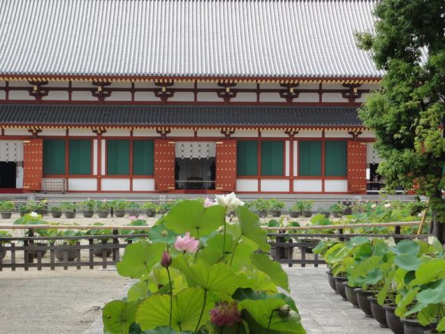 2014年7月20日 薬師寺 蓮と建物