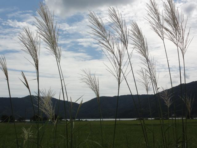 2014年8月29日 余呉湖 秋の風景