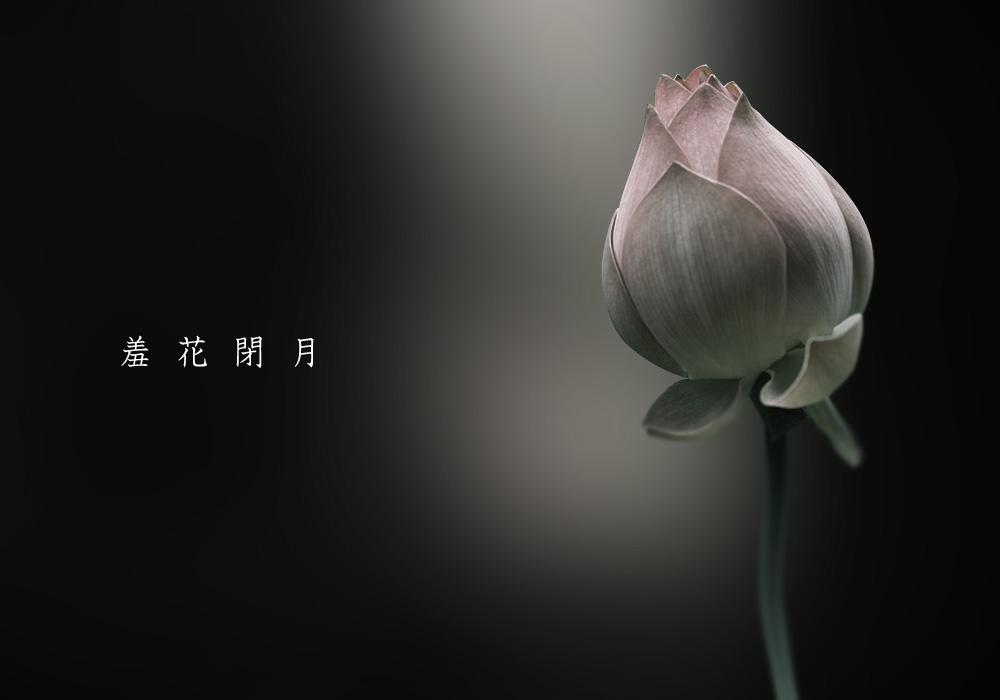 flower0005.jpg