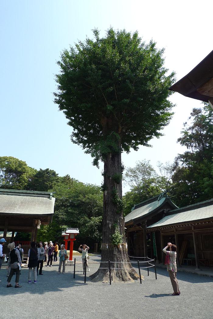 福岡県 宗像大社中津宮 12