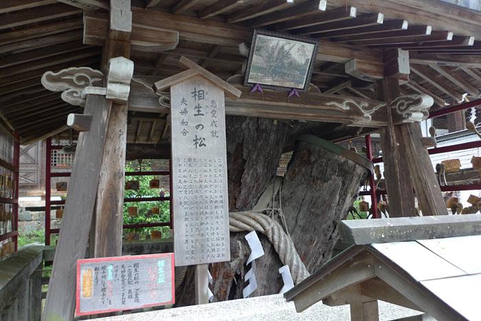 京都府 松尾大社 7