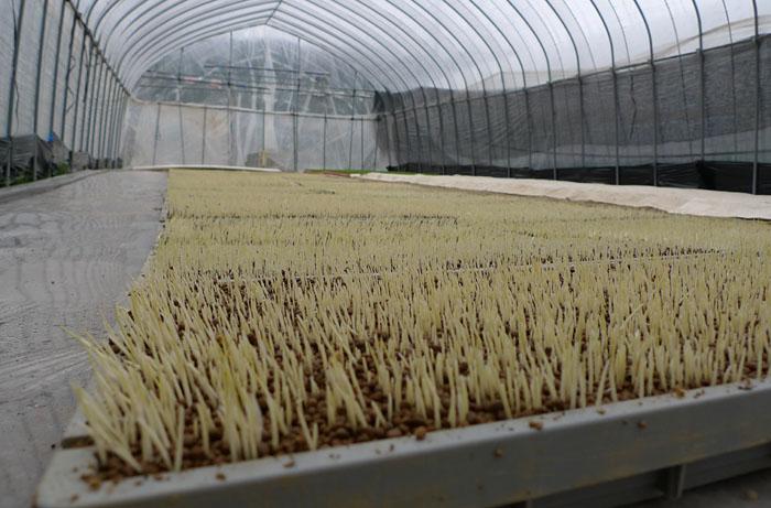 農繁期 2014 育苗 2