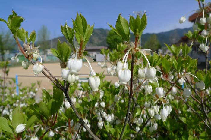 花の季節 2014