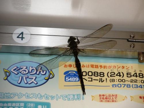 20110825001-5.jpg