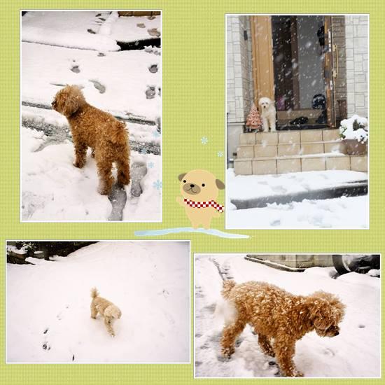 雪2014