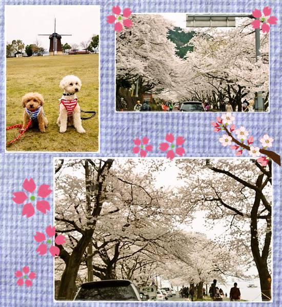 滋賀旅行7