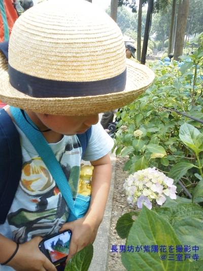 blog凜空と紫陽花20140615KIMG1675