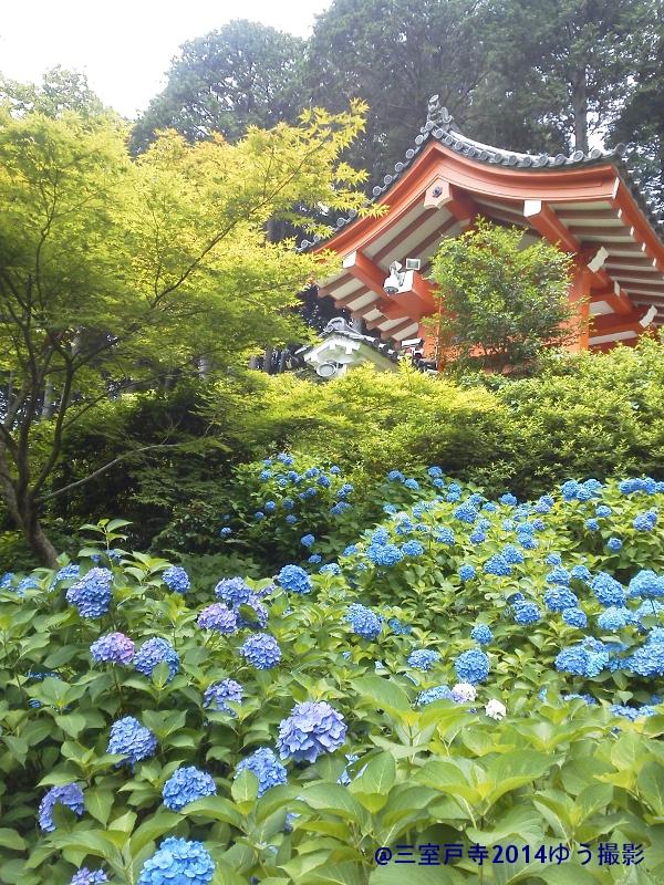 blog三室戸寺‐山門と紫陽花KIMG1662