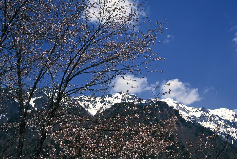 山桜と笠岳01