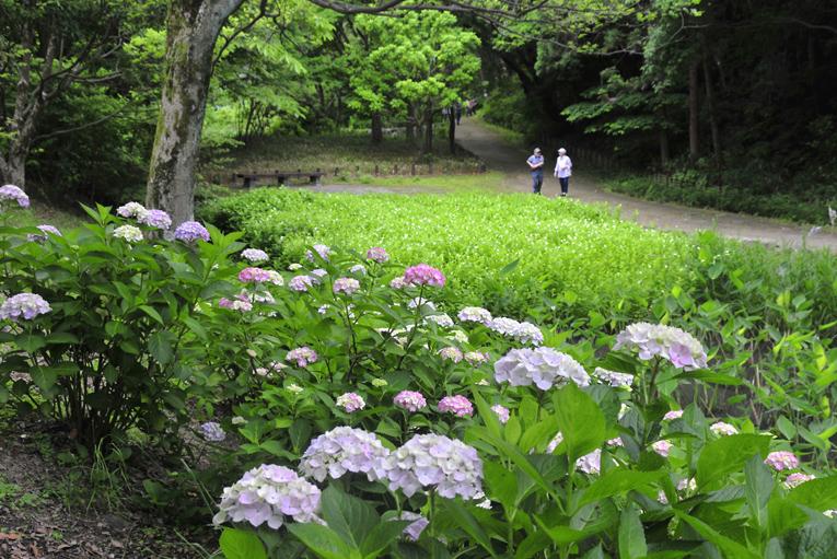 260612山田池公園04