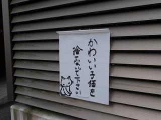 猫を捨てないで