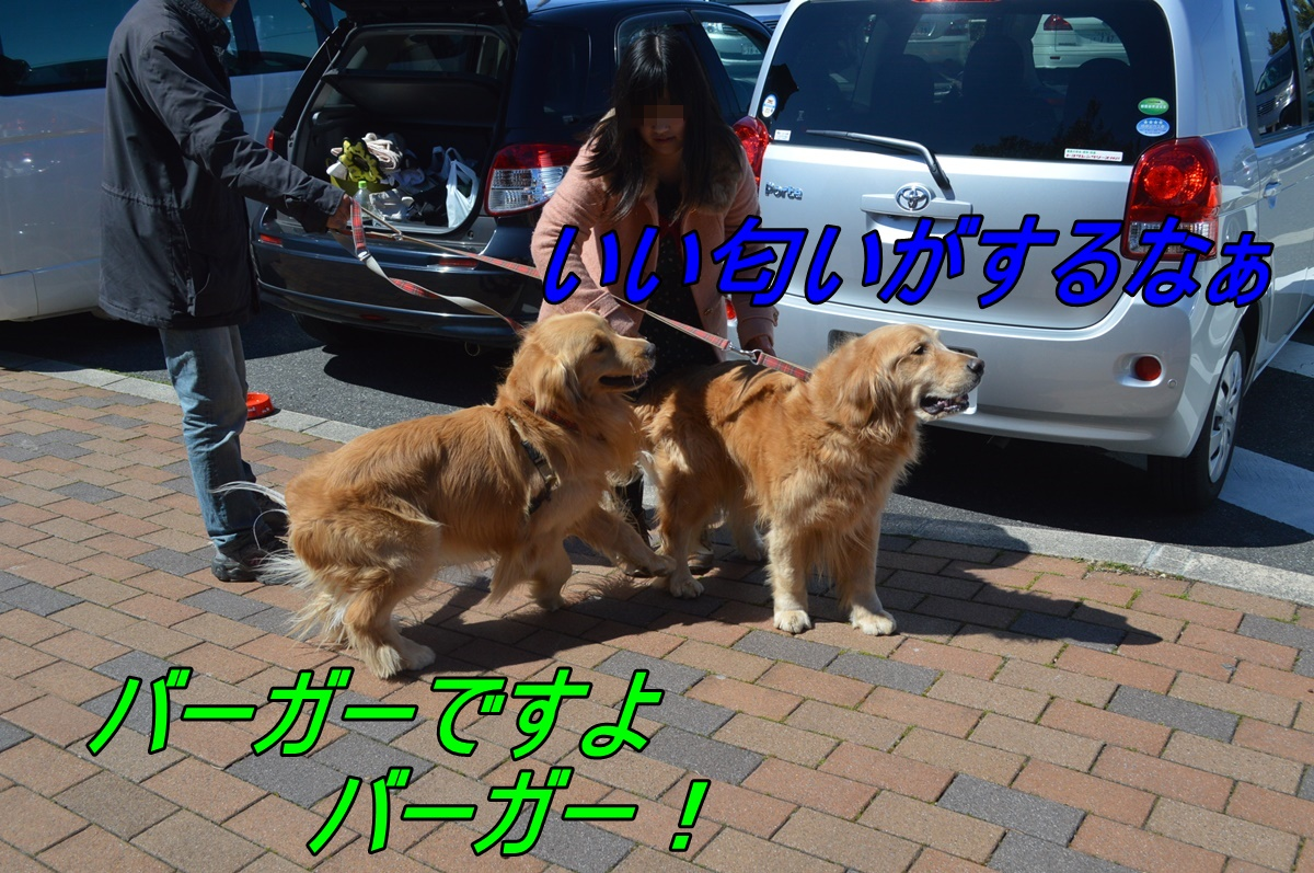 DSC_2836_20140329220153711.jpg