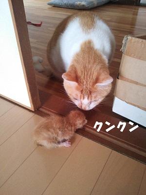 ナッツ・ユーリ2