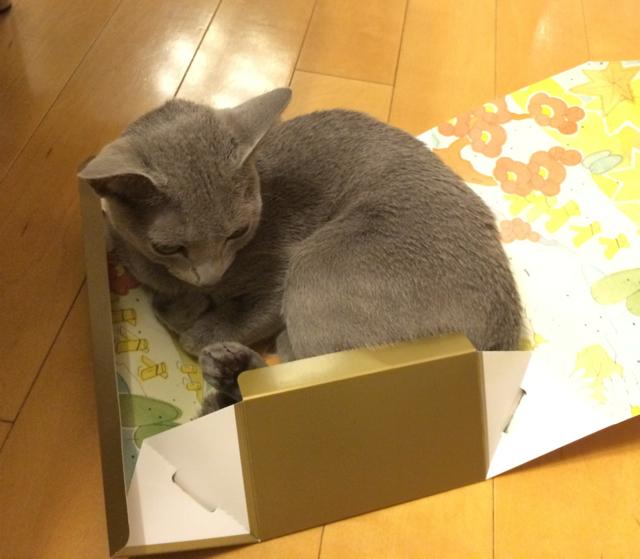 箱ミチミチ