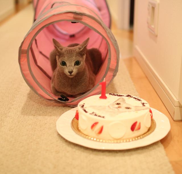 ケーキとアンとプレゼント