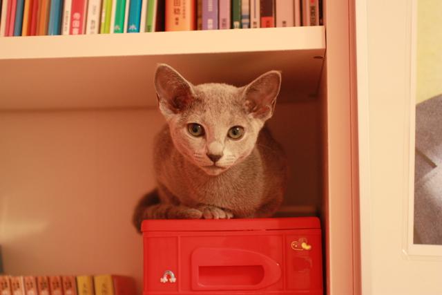 本棚 エマ