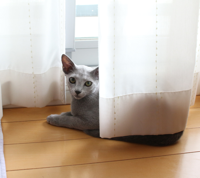 エマたん窓辺