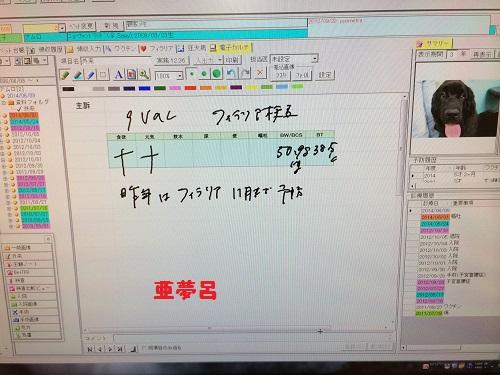 -3抜糸20140609ワクチンフィラリア検査ハイジ 004