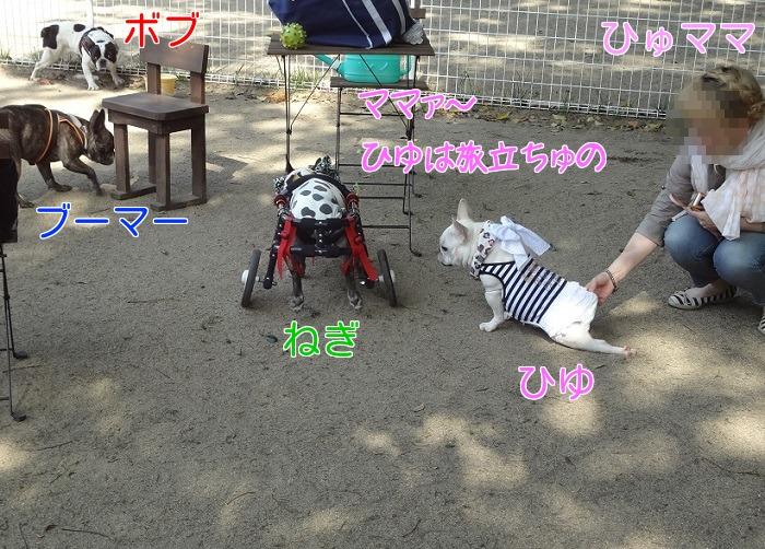 201405212208143db.jpg