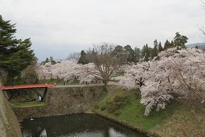 sakura-turugajyo19-web300.jpg