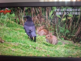 20140529_DVD2.jpg