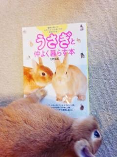 20140612_うさぎと仲良く暮らす本3