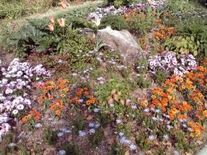 長居公園 植物園(2011年)より