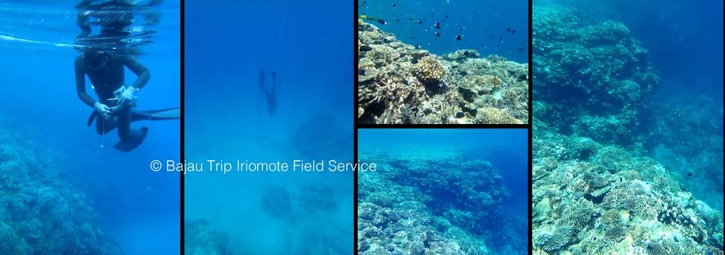 Iriomote2014-03.jpg